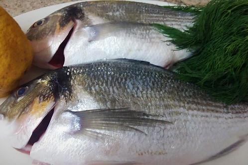 Рыба ципура