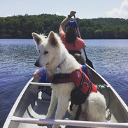Dogs are allowed on canoes and kayaks