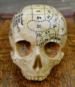 Chocolate Phrenology Skull