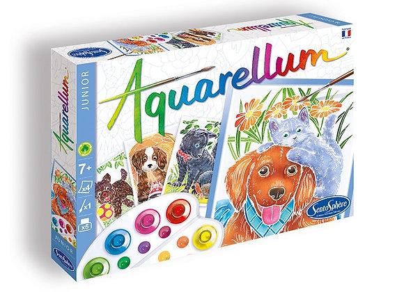aquarellum chiots
