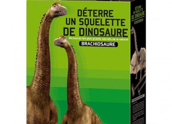 Déterre ton dinosaure- Brachiosaure
