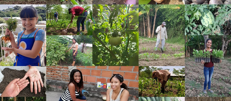 Fostering self-sufficiency: FUNDAEC encourages local food production