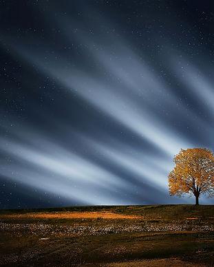 tree-736882.jpg