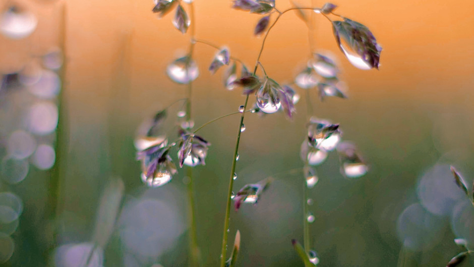 Baha'i Quotes on Dewdrop