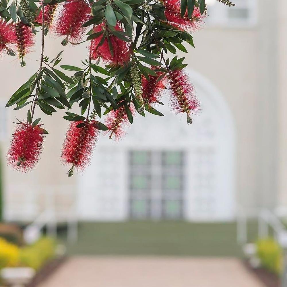 Flowers Sydney Baha'i House of Worship