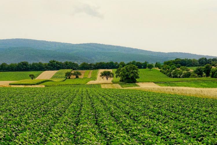 Baha'i principles for rural development.