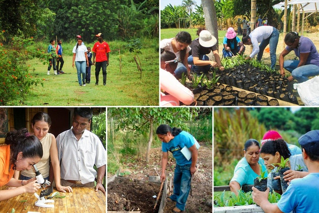 5 images are shown of people gardening