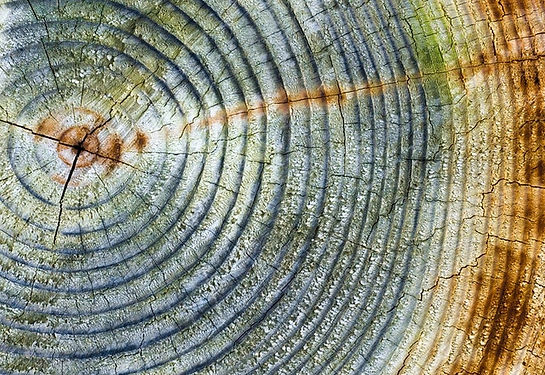 20200528 Timber Tree Abstract.jpg
