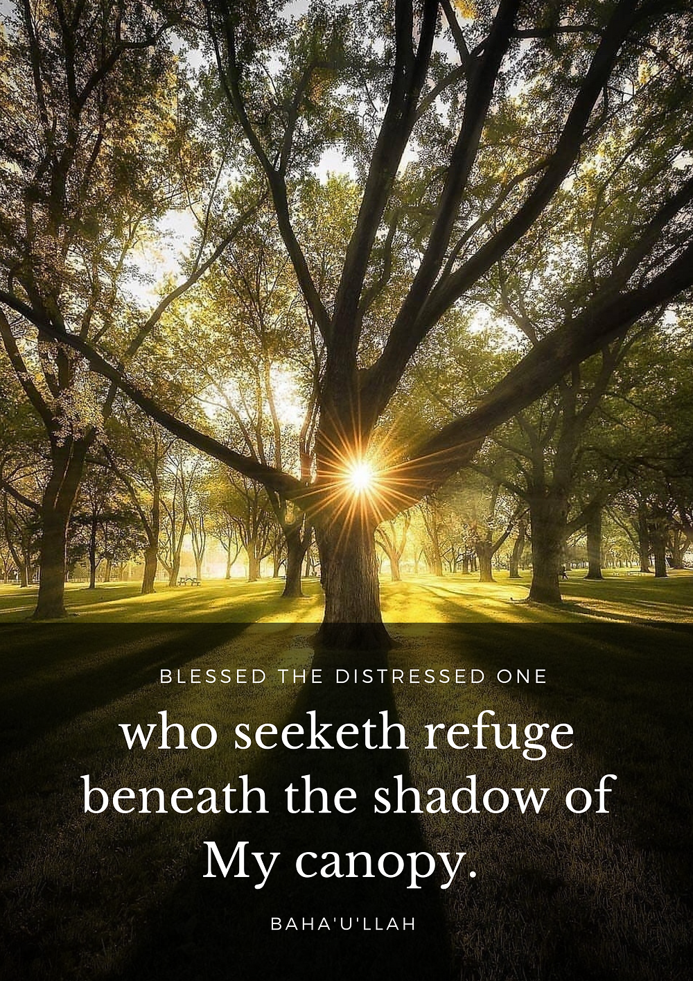 Blessed the distress one who seeketh refuge beneath the shadow of My canopy. - Baha'u'llah