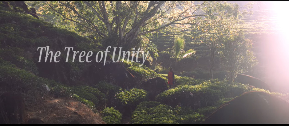 The Tree of Unity | Baha'i Short Film