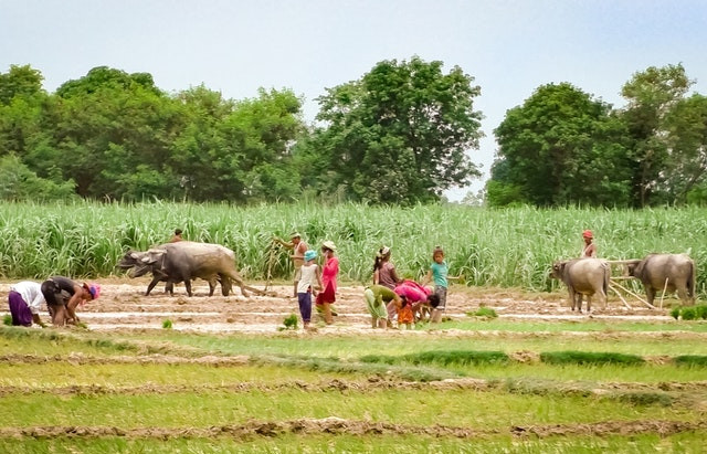 Nepalese village develops agricultural capacity as long-term strategy