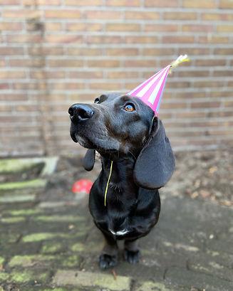 Onze hond Willem