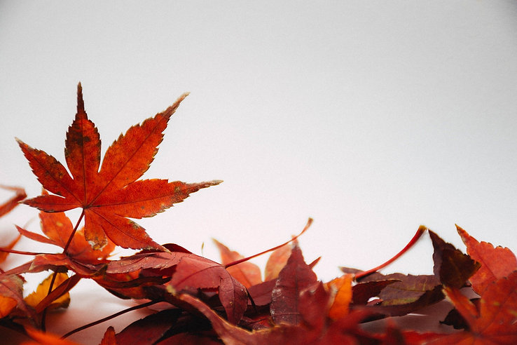 leaves-5300030_1920.jpg