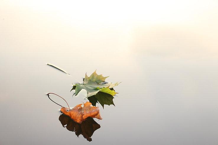 maple-leaves-690233_1920.jpg