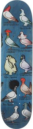 """ANTIHERO - Pfanner Show Pigeons 8.0"""""""