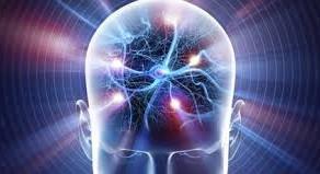 Le Cerveau, ses Multiples Fonctions en tant que Chef d'Orchestre de l'Organisme et le Neurofeedback