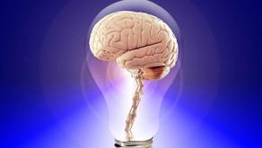 Comprendre le Cerveau et ses Fonctions