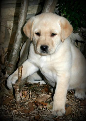 Handsome Pup