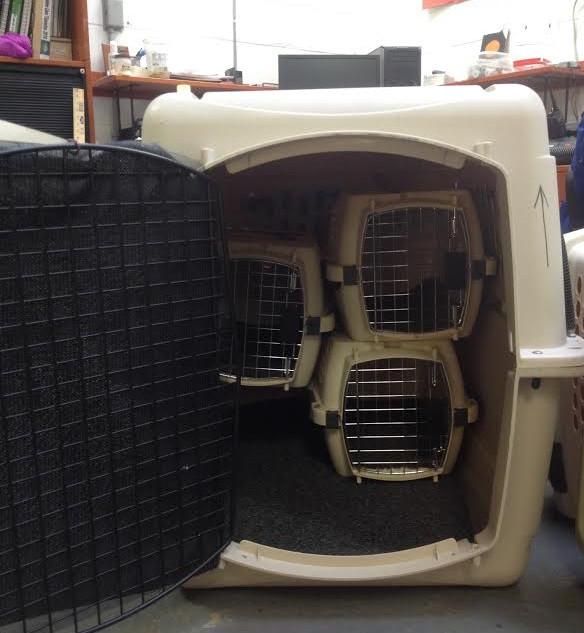 Atlantic Puffin(s) crate