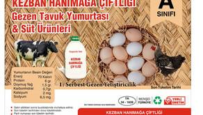 Yumurta ve Süt Ürünleri