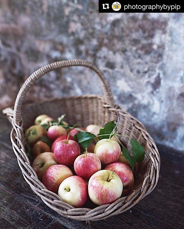 Regram _photographybypip _Gorgeous galas! 🍎🍎🍎 come and pick your own!