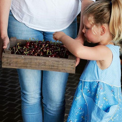 The excitement is building...the cherries are ripening..