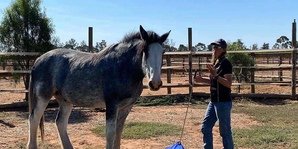 Harrison Holistic Horsemanship Clinic