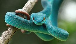 snake-species.jpg