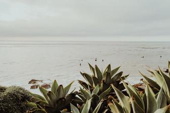 Ocean, Santa Cruz CA