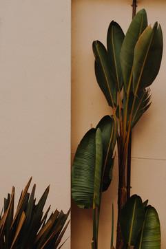 Wall and Plant, Santa Cruz CA