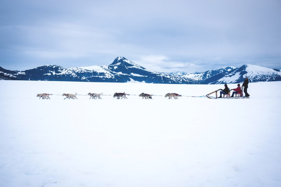 Husky sledding in the snowy mountains of Iceland