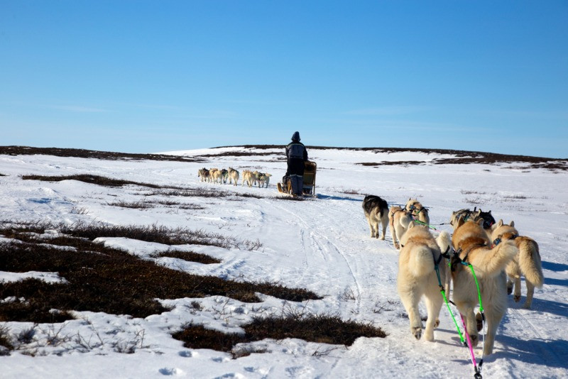 Husky dog sledding in the plains of Iceland