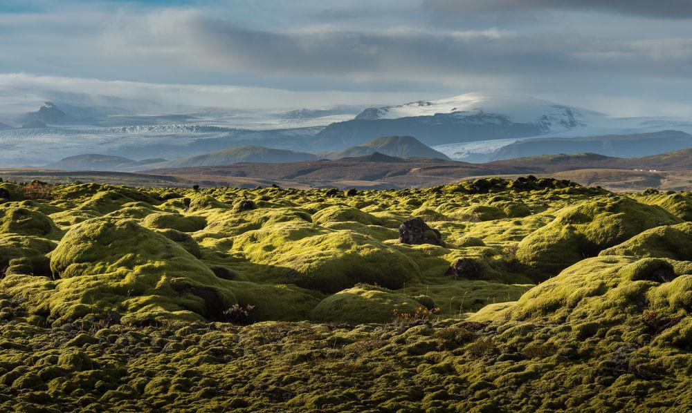 campo de lava islandés cubierto de musgo