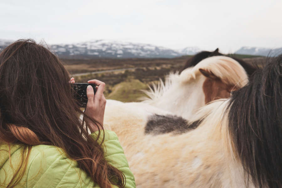 woman taking pictures of Icelandic horses