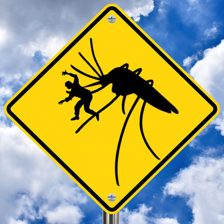 Mosquitoes in Iceland: Are There Any?