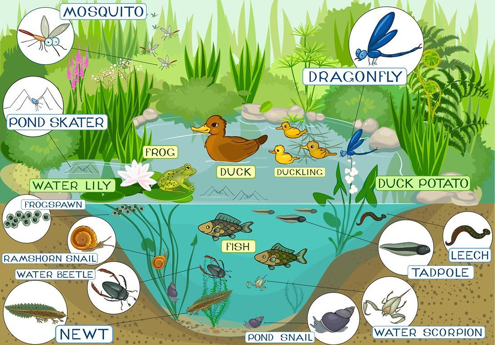 Mosquito ecosystem depicted