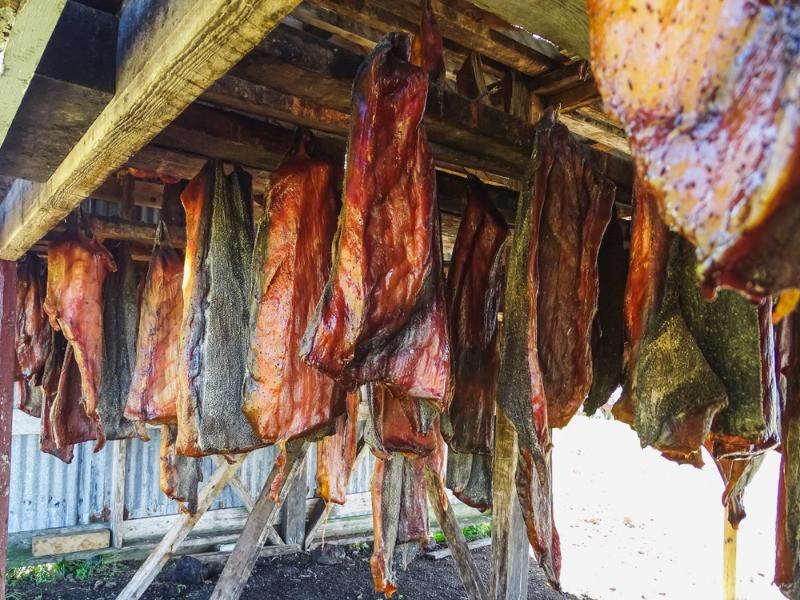 Tiburónfementandose al aire, uno de los platos más famosos de la gastronomía de Islandia