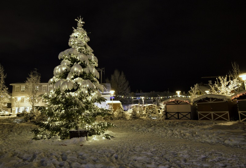 snowy christmas tree in Iceland's new year's eve