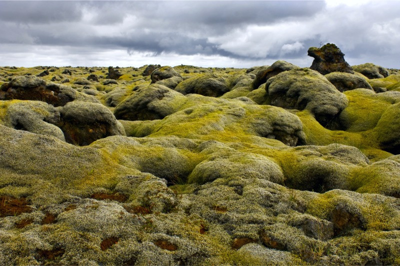 Laki volcano lava field and volcanic moss