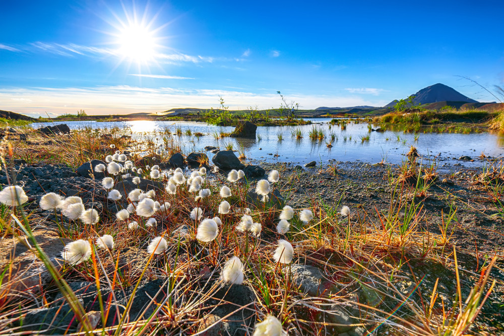 vista sulla riva del lago Myvatn