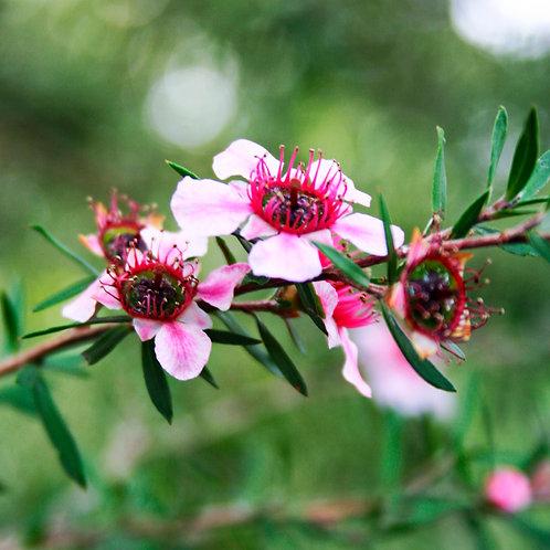 #204 - Branch Blossoms
