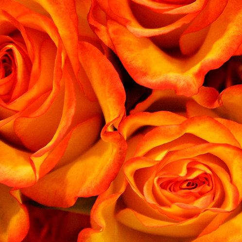 #215 - Orange Roses