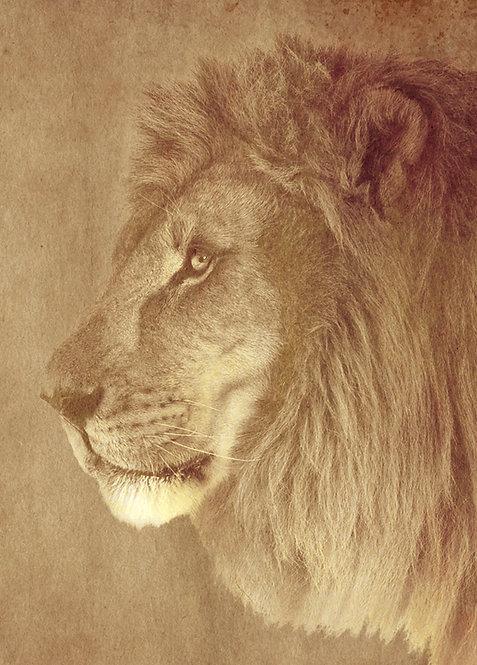 #573 - The Lion