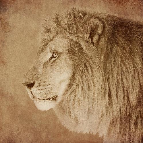 #233 - The Lion