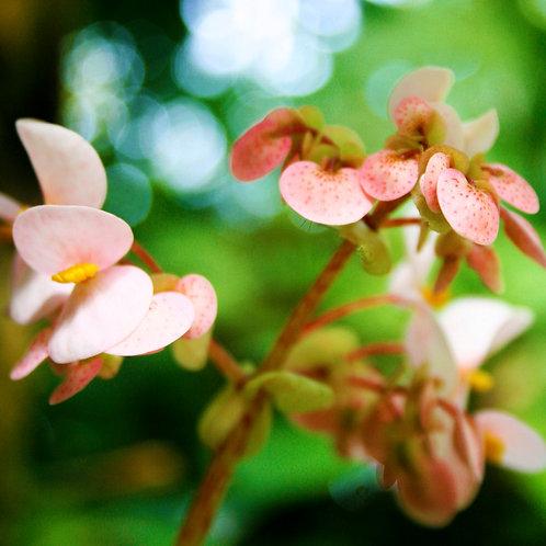 #213 - Little Branch Flowers
