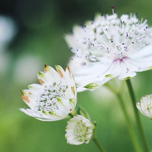 #321 - Soft Flowers