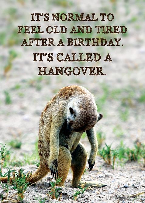 #562 - Meerkat Hangover