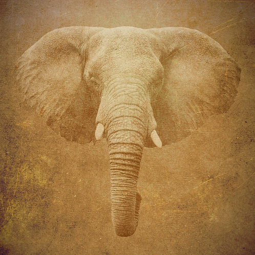 #235 - The Elephant