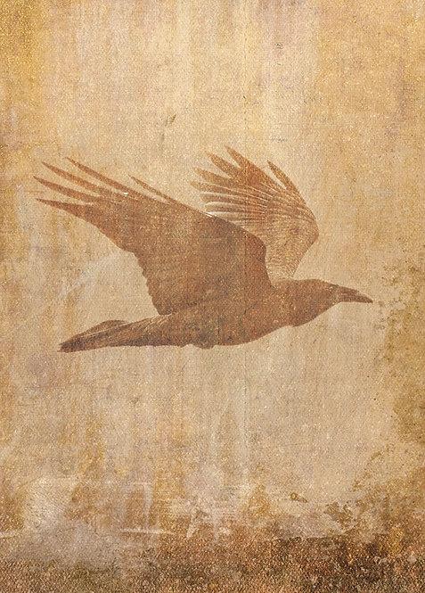 #515 - Crow