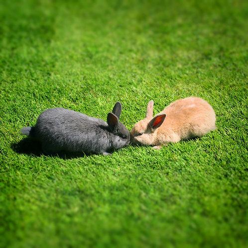 #294 - Bunny Kisses